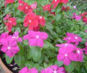 庭に咲くお花